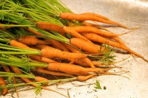 3 легко выращиваемых овоща для вашего сада